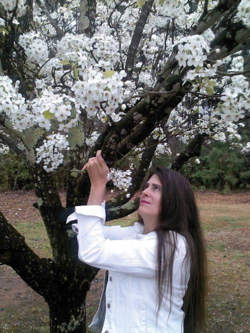 springbloomingtrees