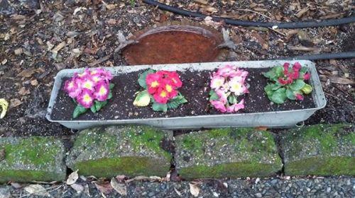 aleciaflowers