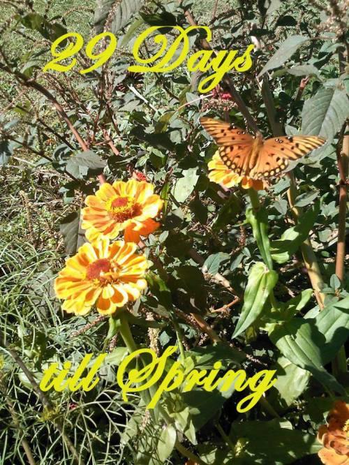 spring29days