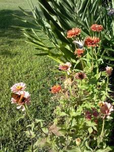 sunflowergarden3